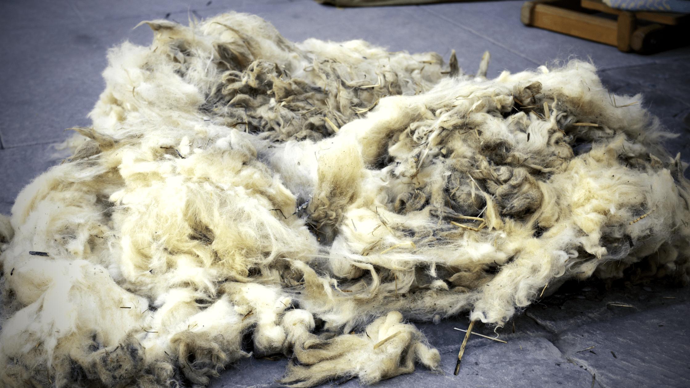 переработка овечьей шерсти